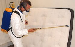 Bed Bug Extermination Services
