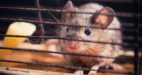 Rat & Mice Removal & Control Services